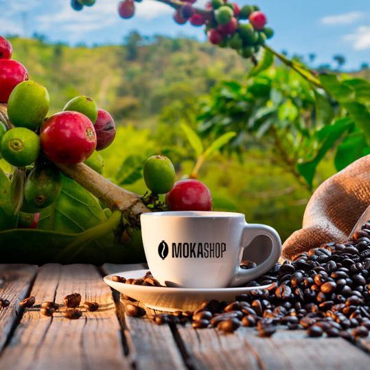 Basel koffee & Tea